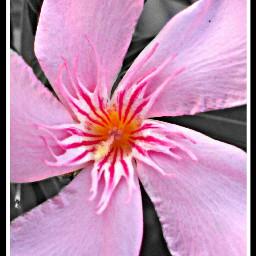 black & white flower