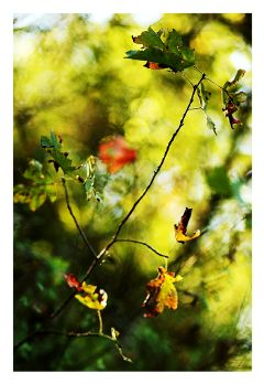 bokeh colorful nature fall photography