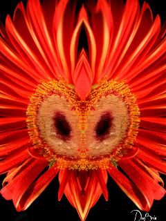 photography nature flower mirror owlseye wapmirroreffect