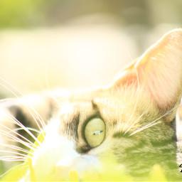cat pets & animals photography love nature eye