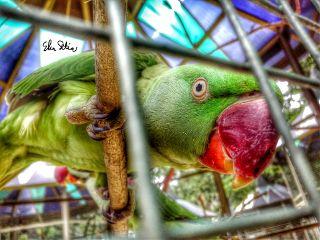 colorful cute hdr nature pets & animals
