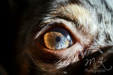 photography cute love pets & animals eye
