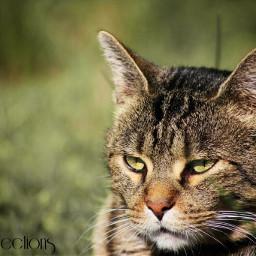 nature pets & animals cat canon
