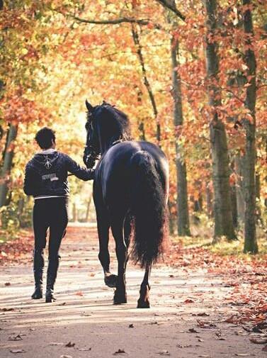 #onlyhorses