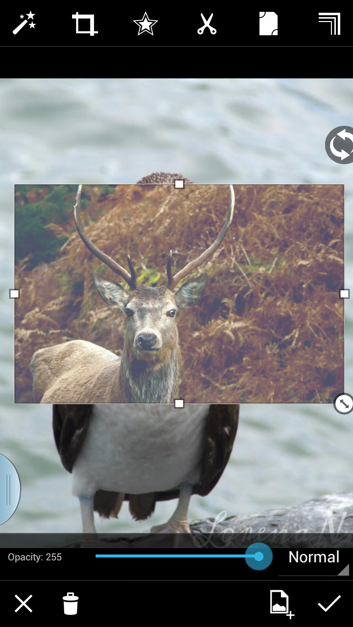 Animal hybrid through free crop photo editing