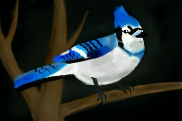dcbird colorful drawing nature pets & animals