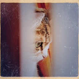 cat pets & animals cute