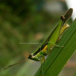 indonesia photography bokeh nature pets & animals