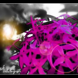 photography pink color splash nature flower
