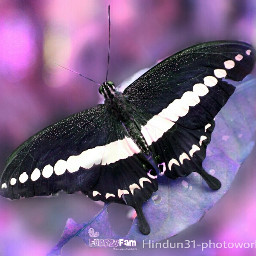 indonesia photography nature butterfly bokeh colorful wapfzf funnzyfam