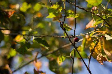 photography switzerland tree nature