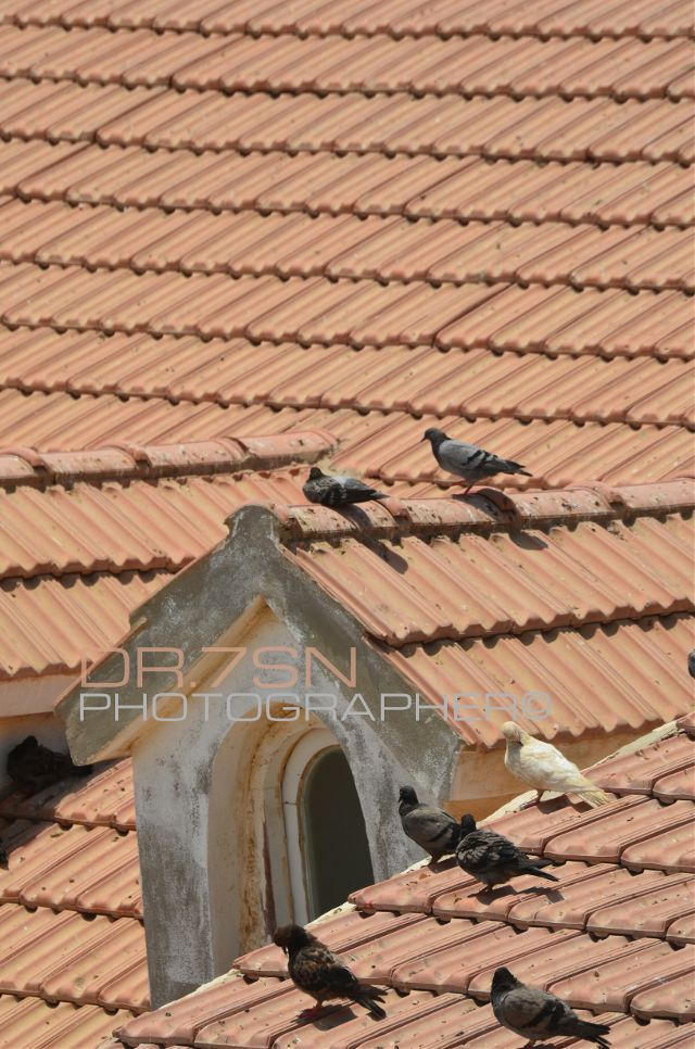 pictures of roofs
