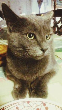 pets & animals cat adorable