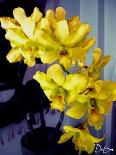photography flower yelloworhid nature