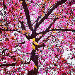 nature pink colorful photography