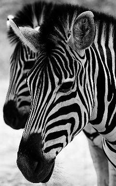 pets & animals photography nature black & white