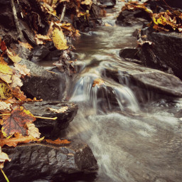 photography nature water forest autumn