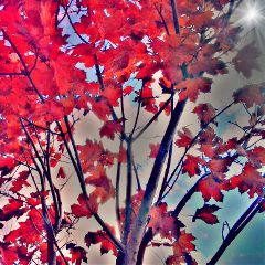 love photography autumn emotions popart