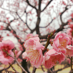 flower nature spring hellospring