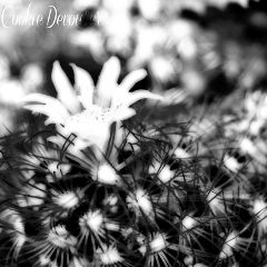 nature summer photography black & white vintage flower