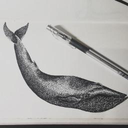 dotart pets & animals drawing art black & white