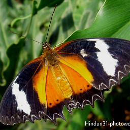 indonesia photography nature butterfly bokeh photostory