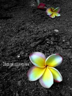 photography interesting nature flower black & white